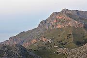 Die Mallorca-Geburtshelferkröte (Alytes muletensis) lebt ausschließlich in der Sandstein-Felslandschaft der Serra de Tramuntana im Nordwesten Mallorcas. Erst im Abendlicht erreichen die Wissenschaftler wieder die Straße, von der aus sie, die eingefangenen Kaulquappen im Gepäck, mit dem Auto nach Las Palmas zurückkehren.