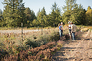 Claire Luby, Tim Wastell, Andrew Still, and Alex Wenger discuss organic seed breeding at Adaptive Seeds Farm in Sweet Home, OR.