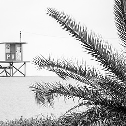 Newport Beach Lifeguard Tower P with a palm tree bush black and white panoramic photo. Newport Beach is a popular coastal city in Orange County Southern California in the United States of America. Panorama ratio is 1:3. Photo Copyright ⓒ 2010 Paul Velgos with All Rights Reserved.