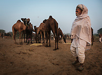 PUSHKAR, INDIA - CIRCA NOVEMBER 2016: Camel herder early morning in the Pushkar Camel Fair grounds. It is one of the world's largest camel fairs. Apart from the buying and selling of livestock, it has become an important tourist attraction.