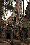 "What many people don't realize is that the name ""Angkor Wat"" only refers to one building complex among many. The greater Angkor group covers 77 square miles...This amazing building is one of many found in the Ta Prohm temple complex... an area known for the huge trees that have partially destroyed, and partially kept together the buildings. This particular area has been left relatively untouched by archaeologists, allowing visitors to feel a little of what the 19th century explorers must have felt when they (re) discovered it."