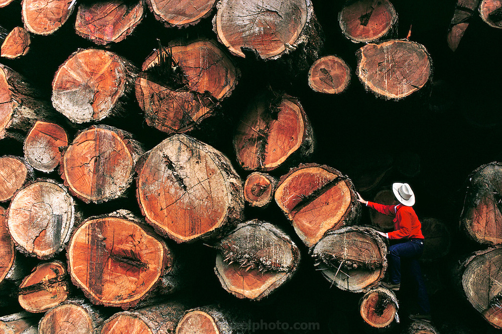 Redwood Logs, Northern California, USA. MODEL RELEASED.
