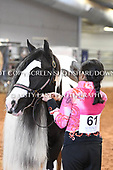 20. YOUTH GELDING ALL AGES