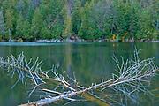 Fallen trees in northern lake<br />Lake Superior Provincial Park<br />Ontario<br />Canada