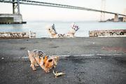San Francisco waterfront feature for Port of San Francisco, photographed in San Francisco, California, on November 7, 2017. (Stan Olszewski/SOSKIphoto)