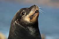 This curious ocean mammal gave me a weird look when I took this sea lion portrait photo in La Jolla.