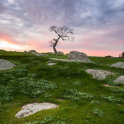 Lone tree and rocks at sunset