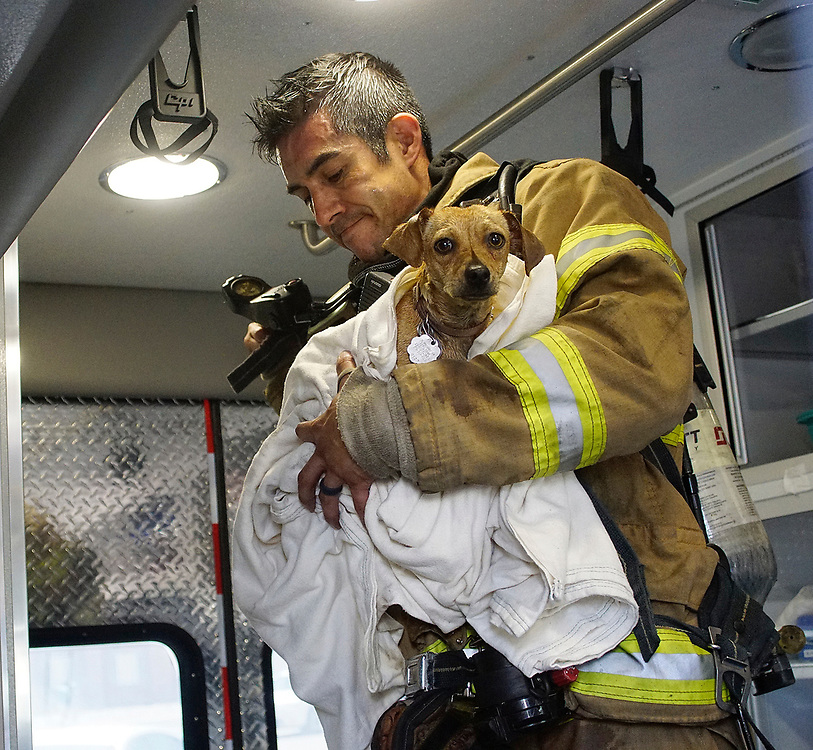 apl053017d/ASECTION/pierre-louis/JOURNAL 053017<br /> Albuquerque firefighter Robert Arrieta, ,  cares for a rescued chihuahua from the apartment fire at Montgomery and Carlisle NE .Photographed  on Tuesday May 30,  2017. .Adolphe Pierre-Louis/JOURNAL