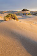 Sand dunes glowing golden in evening light, Oregon Dunes National Recreation Area