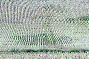 field after the crop has been taken from the land