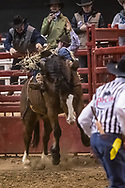 Bareback rider Mike Fred rides Mosbrucker Rodeo's +206 Dakota Pride during the Bismarck Rodeo on Saturday, Feb. 3, 2018. He had a score of 75. More photos of each run are available at Bobwire-S.com.