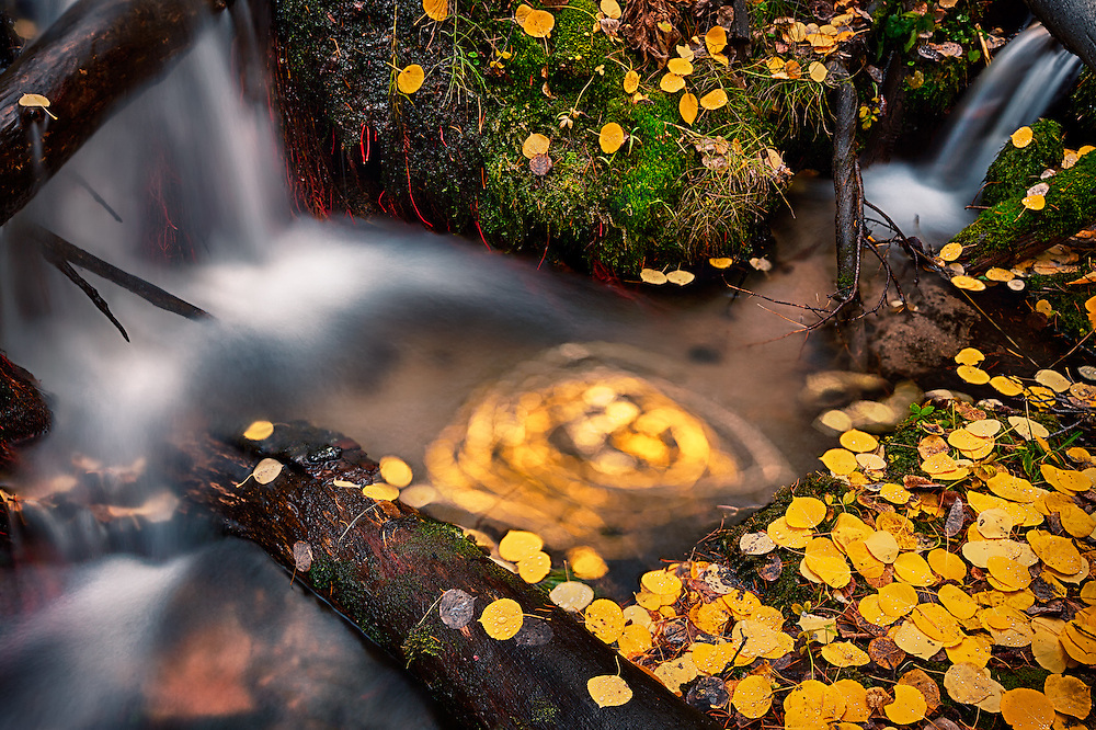 Fallen aspen leaves swirl in a pool at the confluence of two small mountain brooks.