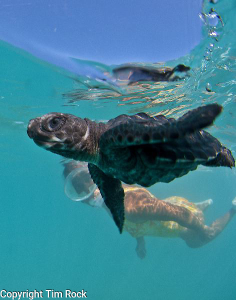 Diving in Northern Busuanga, Philippines looking for sea turtles and dugongs