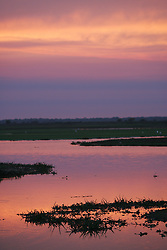 "The sun sets over one of the many rivers in Los Llanos in Venezuela. Los LLanos are the grasslands in western Venezuela famous for the ""llanera"" culture of cowboys and music.  Many working ""Hatos"" , or cattle ranches, dot the landscape of grasslands and river systems, offering tourists a chance to see the beautiful landscape and various wildlife.  Tourists go out on land and water excursions where they get a chance to see see caiman, orinoco crocodile, anaconda, piranha, numerous bird species and capybara, the world's largest rodent."