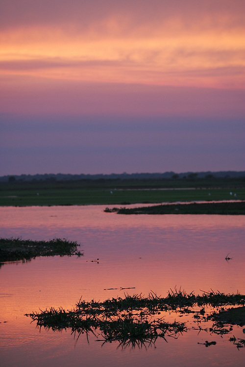 """The sun sets over one of the many rivers in Los Llanos in Venezuela. Los LLanos are the grasslands in western Venezuela famous for the """"llanera"""" culture of cowboys and music.  Many working """"Hatos"""" , or cattle ranches, dot the landscape of grasslands and river systems, offering tourists a chance to see the beautiful landscape and various wildlife.  Tourists go out on land and water excursions where they get a chance to see see caiman, orinoco crocodile, anaconda, piranha, numerous bird species and capybara, the world's largest rodent."""