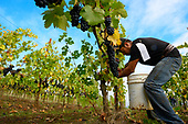 Open Claim Vineyards