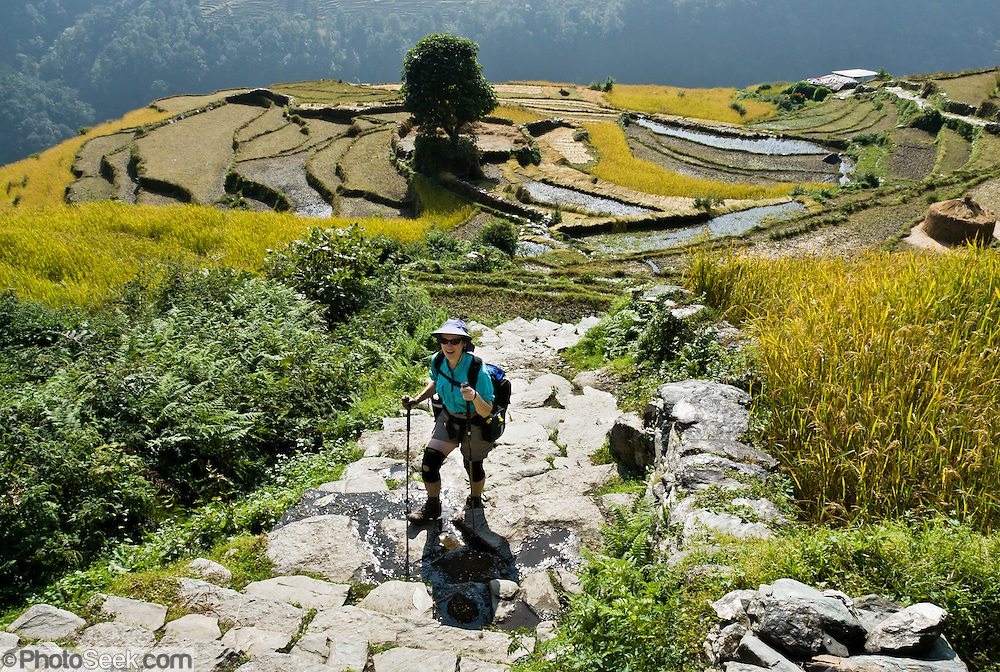 Carol walks a stone path through rice terraces along the trail to Annapurna Sanctuary, near Kimche, in Nepal.