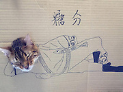 Hilarious photos of cats sticking their heads through holes in cardboard drawings of astronauts, dinosaurs and even Super Mario<br /> <br /> Putting your head through a hole in a cardboard cutout can be an amusing photograph opportunity for human beings - but now a new internet trend is letting our feline friends in on the act.<br /> This set of images shows how a series of cats have been indulging in cardboard art with hilarious results, with one cat transformed into a beefcake, while another rides a broom like a witch.<br /> One owner creates an astronaut design for their favourite moggie and a cat is turned into classic video game character Super Mario. In another funny snap a cat dons a pair of sunglasses.<br /> Another resembles an Indiana Jones-type character and others include a pet with a glass of wine and as a dinosaur. The pictures were uploaded onto the Sad and Useless blog and became an online hit.<br /> ©exclusivepix