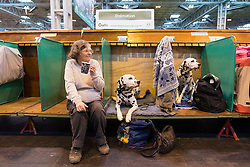 © Licensed to London News Pictures. 10/03/2016. A dog owner with her dogs in the dog benches area before a judging competition. Crufts celebrates its 12th anniversary as the Worlds largest dog show. Birmingham, UK. Photo credit: Ray Tang/LNP