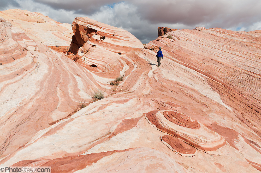 """The """"Fire Wave"""" is a one mile round trip walk in the White Domes area of Valley of Fire State Park, the oldest state park in Nevada (dedicated in 1935). Starting more than 150 million years ago, great shifting sand dunes during the age of dinosaurs were compressed, uplifting, faulted, and eroded to form the park's fiery red sandstone formations. The park also boasts fascinating patterns in limestone, shale, and conglomerate rock. The park adjoins Lake Mead National Recreation Area at the Virgin River confluence, at an elevation of 2000 to 2600 feet (610-790 m), 50 miles (80 km) northeast of Las Vegas, USA. Park entry from Interstate 15 passes through the Moapa Indian Reservation."""