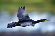 Linnut - Birds