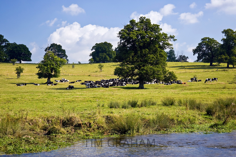 Organic cattle shelter under an oak tree in a Cotswold's meadow  in Sherborne, Gloucestershire, United Kingdom