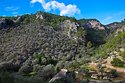 Cami Vell de Lluc trail, Caimari, Mallorca Balearic Islands, Spain