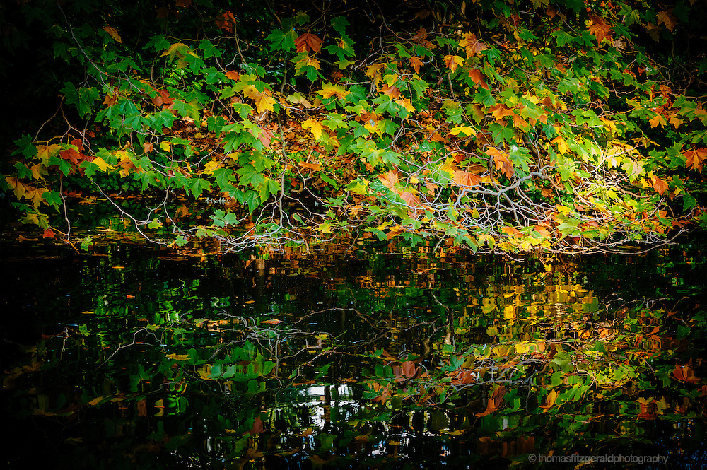 Hanging branches with Green and Brown Autumn Leaves reflected in the waters of a lake below
