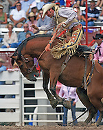 Saddle Bronc Rider Wade Mosher goes for a ride on Bartender scoring a 75, 26 July 2007, Cheyenne Frontier Days