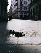 2000 August- Havana, Cuba- ' Shoes on a Sewer '  in Havana, Cuba