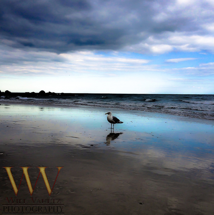 Lone gull on wet sand
