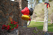 Balloons and ribbons form a memorial at the entrance to the Grant Creek neighborhood of Missoula, Montana on May 2, 2014 where Diren Dede, a German exchange student was shot and killed in the garage of neighbor Markus Kaarma on April 27, 2014.
