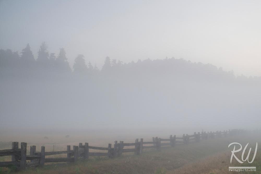 Foggy Morning at Elk Prairie, Prairie Creek Redwoods State Park, California