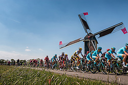 Peloton with riders of Astana Pro Team (KAZ) on the Molendijk at Batenburg, stage 2 from Arnhem to Nijmegen running 190 km of the 99th Giro d'Italia (UCI WorldTour), The Netherlands, 7 May 2016. Photo by Pim Nijland / PelotonPhotos.com | All photos usage must carry mandatory copyright credit (Peloton Photos | Pim Nijland)