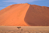Africa, Southern, African, Namibia,  Namib-Naukluft National Park, Hardap Region, Sossusvlei<br /> , Oryx
