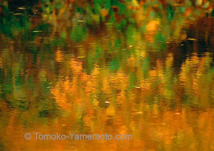 Impressionist reflection photo by Tomoko Yamamoto of orange fall leaves contrasted with green leaves.  Orange leaves and some green leaves   show rippled structure while some green leaves shown as splashes of green color. Original on 35mm slide film.  Shot with a tripod, good for enlargements.