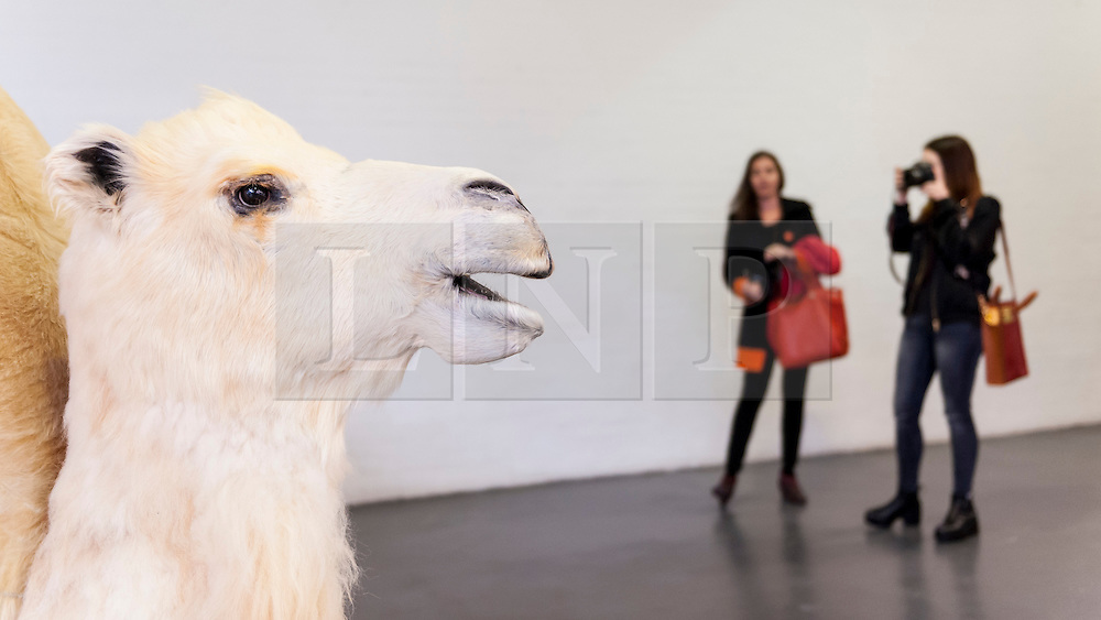 "© Licensed to London News Pictures. 19/05/2016. London, UK. Yang Maoyuan's ""Mandala Camel no. 2"" catches the eye of these visitors.  Art16 opens at Olympia, in west London.  Now in its fourth edition, the fair brings together over 100 galleries from more than 30 countries showcasing a diverse cross-section of work by contemporary artists from around the world for buyers and art enthusiasts to visit. Photo credit : Stephen Chung/LNP"