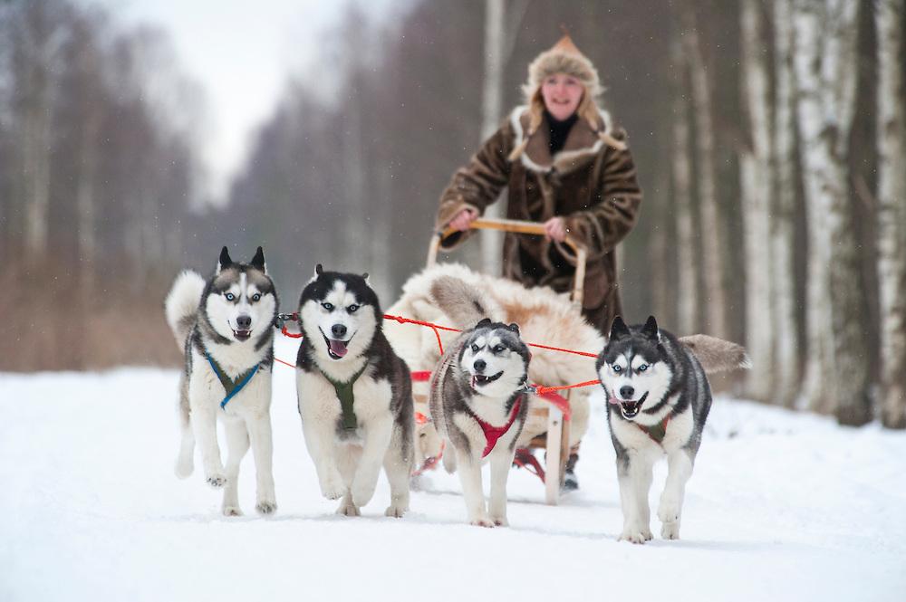 Huskies pulling a sledge, Estonia