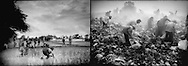 (L) Rice planting in the monsoon season, Uttar Pradesh, India..(R) Squatters follow earth mover, Phnom Penh city dump, Cambodia.