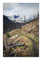 Burned forest, Kootenay National Park British Columbia