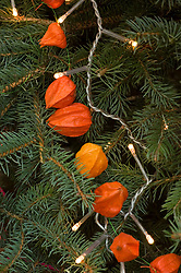 Physalis on Christmas tree with fairy lights - Chinese lanterns
