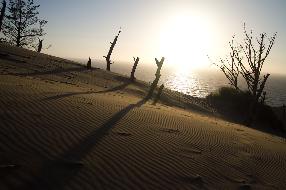Kiwanda Point dune. The Oregon Coast, a classic, beautiful road trip. Heading West from Portland to Tillamook, with a detour to the fishing village of Garibaldi, through Cape Lookout State Park and on to our final destination of Pacific City.