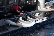 Stanley Park. Vancouver Aquarium. Dolphin Show.