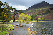 Valley scene - lake shore of Buttermere Lake and High Stile mountain in the Lake District, Cumbria, England, UK