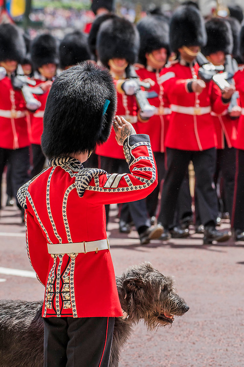 The saluting handler of Domhnall , the regiment's masco of the Irish Guards - tColonel's Review 2018, the last formal inspection of the Household Division before The Queen's Birthday Parade, more popularly known as Trooping the Colour. The Coldstream Guards Troop Their Colour and their Regimental Colonel, Lieutenant General Sir James Jeffrey Corfield Bucknall, takes the salute.