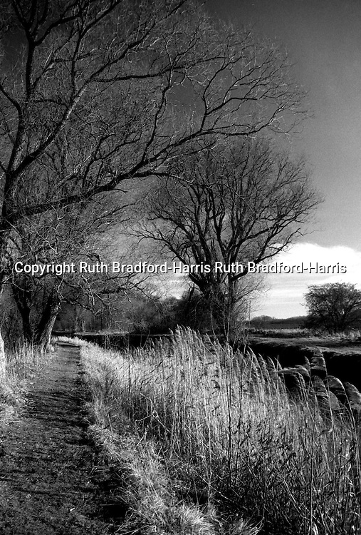 A gloriously sunny day in mid-Winter along the banks of the River Slea, near Sleaford, Lincolnshire.<br />