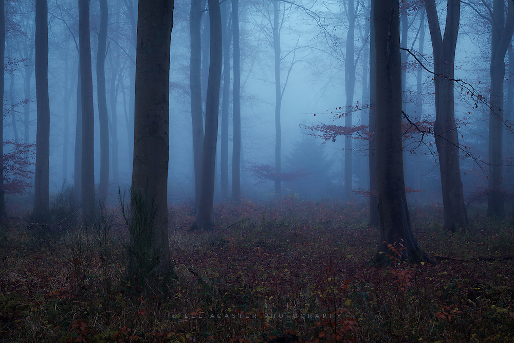 The end of the misty forest series for now I think (unless its misty next week of course) Bit of spli toning on this one, which helps to amplify the mood as I remember it