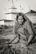 A woman wokring with cow dung, Varanasi (Benares), India