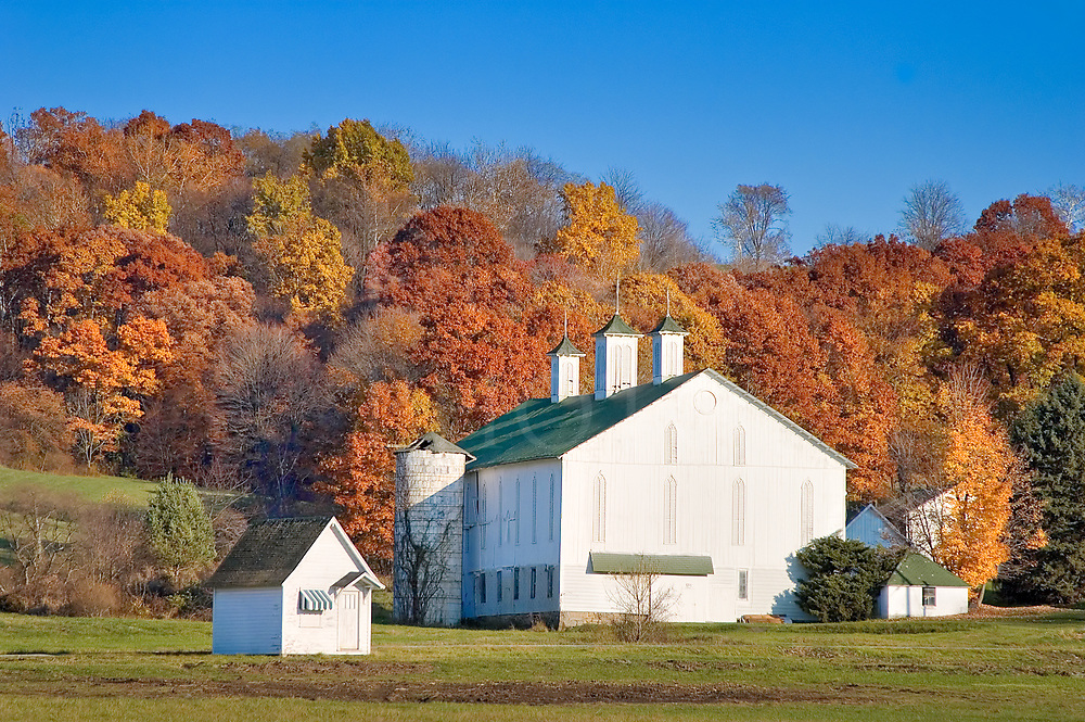 A white barn lies in front of hill covered in fall trees just past peak fall color, with the hues trending to rusty orange and yellow. The use of the very small white outbuilding standing in the open all by itself remains a complete mystery; it may have been moved there on skids with a tractor. Nevertheless, there it sits as a tiny satellite in orbit around the mother ship with three tall cupolas.