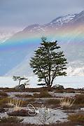 Rainbow over Ainsworth Bay, Tierra del Fuego, Chile.